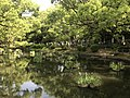 Iris Pond of Kashii Shrine 1.jpg