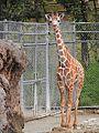Ishikawa Zoo - Animals - 13 - 2016-04-22.jpg