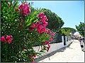 Isla de Armona (Portugal) (48672771538).jpg