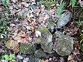 Ison Creek Kimberlite (Elliott County Peridotite, Late Cretaceous, 75 Ma; west of Stephens, Elliott County, Kentucky, USA) 16 (48383221712).jpg