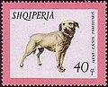 Istrian-Brack Albania stamp.jpg