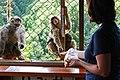 Iwatayama Monkey Park (3810482439).jpg