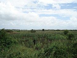 Maissipelto Jamaame.