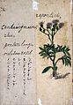 Japanese Herbal, 17th century Wellcome L0030111.jpg