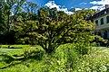Japanischer Ahorn Queen-Auguste-Victoria-Park (Umkirch) jm30914.jpg