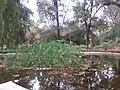 Jardín de Monforte 105.jpg