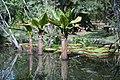 Jardim Botânico - panoramio (4).jpg