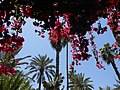 Jardin Majorelle, Marrakech - panoramio (1).jpg