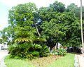 Jardin d'essai El Hamma - Alger.JPG