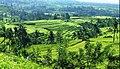 Jatiluwih UNESCO rice terraces.jpg