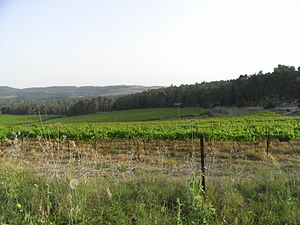 Jerusalem corridor - Vineyard in the Jerusalem corridor