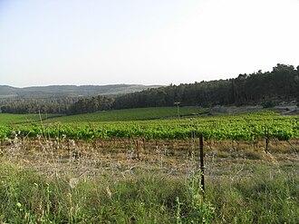 Jerusalem corridor - Vineyard in the Jerusalem corridor