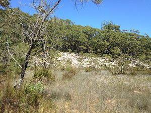 Jervis Bay Nuclear Power Plant proposal - View of the east end of the Jervis Bay nuclear power plant site, 2014