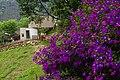Jianshi Lavender Cottage 尖石薰衣草 - panoramio.jpg
