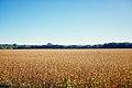Junction-fields-il.jpg