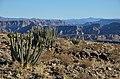 Kaktusy u Fish River Canyon - Namibie - panoramio.jpg
