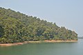 Kalada Forest - Ramial Dam Area - Dhenkanal 2018-01-25 9497.JPG