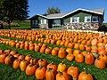 Kalscheur's Pumpkin Patch - panoramio - Corey Coyle (2).jpg