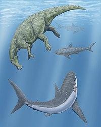 Beautiful Artistu0027s Impression Of A Cretoxyrhina And Two Squalicorax Circling A Dead  Claosaurus In The Western Interior Seaway