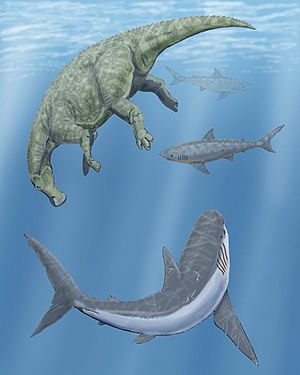 Squalicorax - Two Squalicorax and a Cretoxyrhina circling around a dead Claosaurus