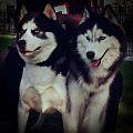 Kapo and Kody from Brooklyn NYC.jpg