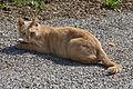 Katze in Stift Ardagger.jpg