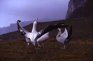 Seabird breeding behavior