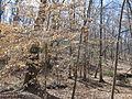 Kings Mountain National Military Park - South Carolina (8557781725) (2).jpg