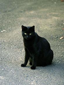 âgés de noirs chatte