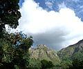 Kirstenbosch 02 (3515646176).jpg