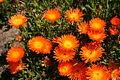 Kirstenbosch National Botanical Garden 6 (2933144119).jpg