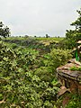Kordara, Madhya Pradesh 485446, India - panoramio (8).jpg