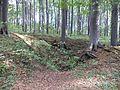 Krajobraz Segietu 1.jpg