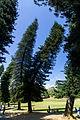 Kurvenbäume (25758978476).jpg