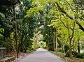 Kyoto Shimogamo-jinja Wald.jpg