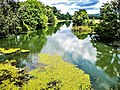 L'Ognon en amont du pont de Voray-sur-l'Ognon.jpg