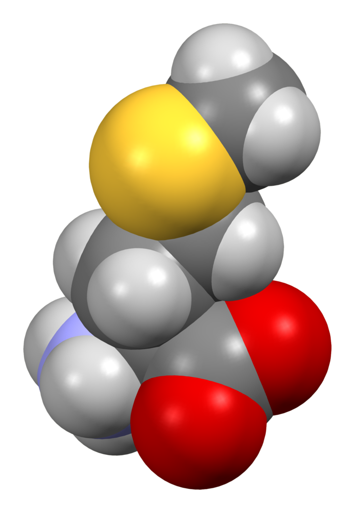 file l methionine from xtal mercury 3d sf png wikipedia file l methionine from xtal mercury 3d