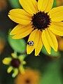Ladybug - Flickr - strollers.jpg