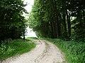 Landschaftsschutzgebiet Horstmanns Holz Melle - Waldanfang- Datei 3.jpg
