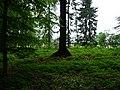 Landschaftsschutzgebiet Pferdebruch Eickholt Melle -Waldausgang- Datei 1.jpg
