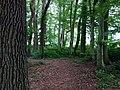 Landschaftsschutzgebiet Warmenau-Ufer LSG OS 00019 Datei 19.jpg