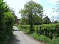 Lane in Henlade, Somerset - geograph-1852490.jpg