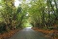 Lane to Warbleton - geograph.org.uk - 1528711.jpg