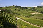 Green vineyards cover rolling hills