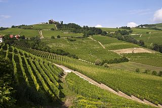 Langhe hilly area in Piedmont, Italy