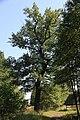 Lasy Łączańskie - panoramio (22).jpg