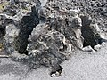 Lava mould of 2 trees.jpg