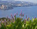 Lavender (2473368840).jpg