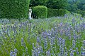 Lavender Collection at Buckfast Abbey - geograph.org.uk - 944639.jpg