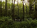 Leśne mokradła - panoramio (1).jpg